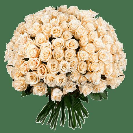 Букет кремовых роз Талея 201шт