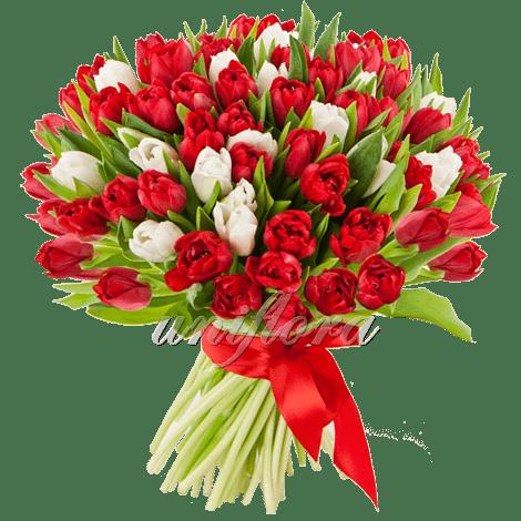 Букет 101  тюльпанов микс красных и белых