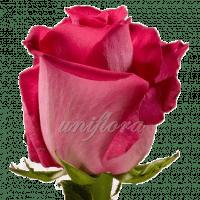 """Роза сорта """"Топаз"""""""