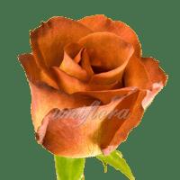 """Роза сорта """"Кофе брейк"""""""