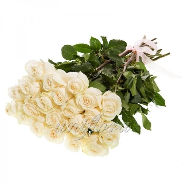 Букет из 19 белых роз (импорт)
