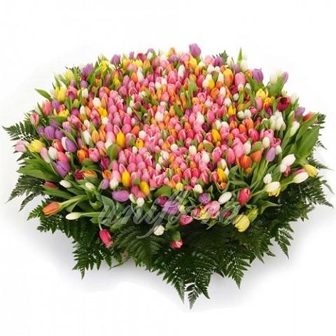 Корзина с 501 тюльпаном