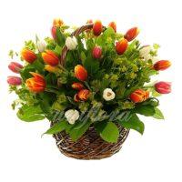 Корзина с 51 тюльпаном 3х-цветный микс