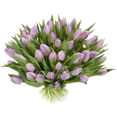 Букет из 71 лилового тюльпана