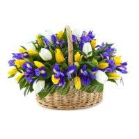 Корзина 51 тюльпан желтый и белый