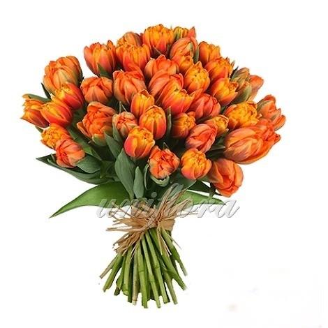 Букет из 57 оранжевых пионовидных тюльпанов