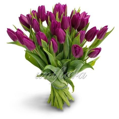 Букет из 25 фиолетовых тюльпанов
