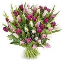 Букет-микс из 55 тюльпанов в розово-фиолетовых тонах