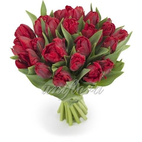 Букет из 25 бордовых тюльпанов