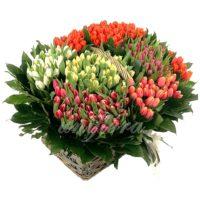Корзина с 301 тюльпаном