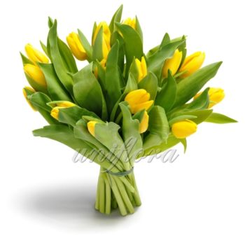 Букет из 23 желтых тюльпанов