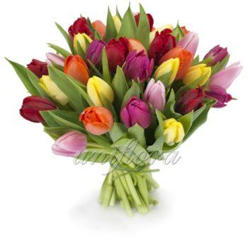 Букет-микс из 35 тюльпанов