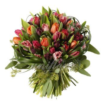Букет из 57 разноцветных тюльпанов в оранжево-пурпурной гамме