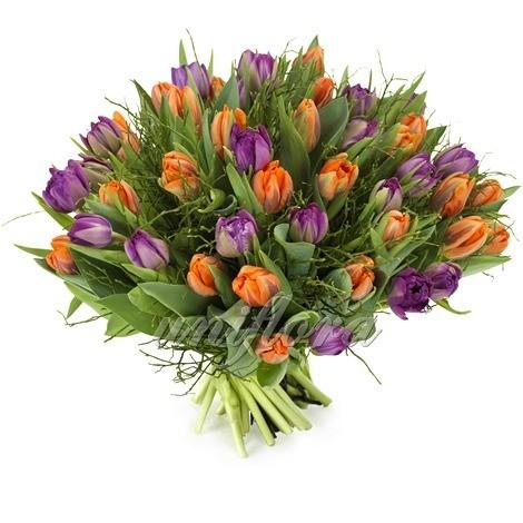 Букет из 51 оранжевого и фиолетового тюльпана