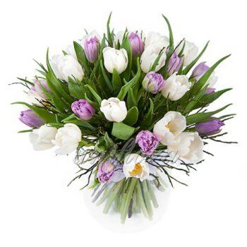 Букет из 31 белого и сиреневого тюльпана