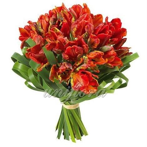 Букет из 31 красно-оранжевого тюльпана и зелени