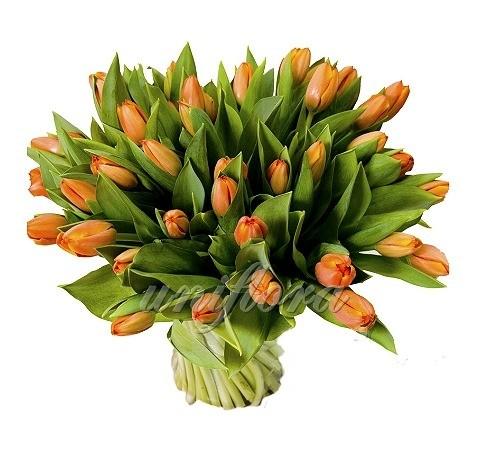 Букет из 55 оранжевых тюльпанов