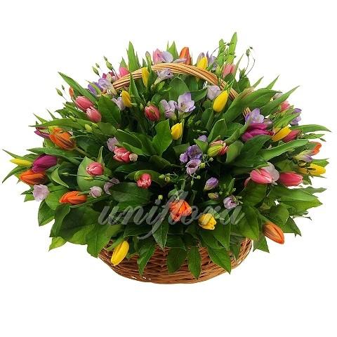 Корзина с 51 тюльпаном