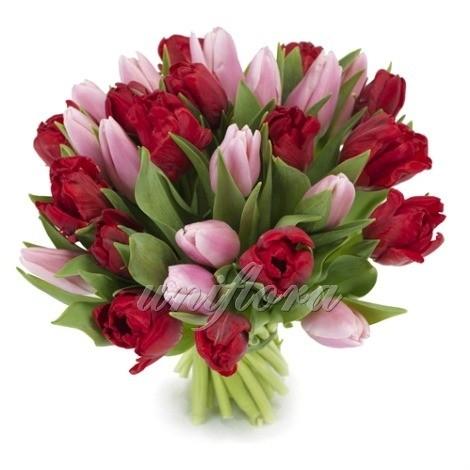 Букет из 37 розовых и бордовых тюльпанов