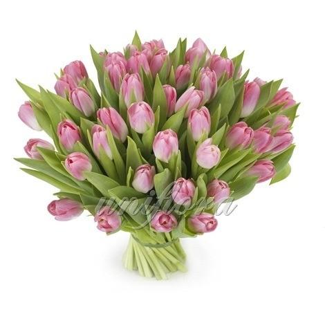 Букет из 65 розовых тюльпанов