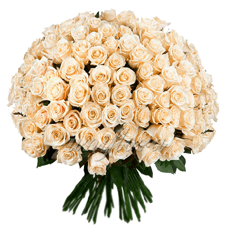 Загружен для Букет из 201 кремовой розы | Талея (укр)
