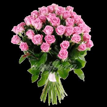 Букет из 75 розовых роз | Аква (укр)
