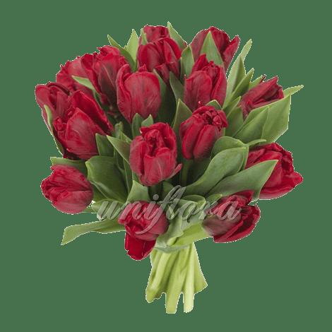 Букет из 19 бордовых тюльпанов