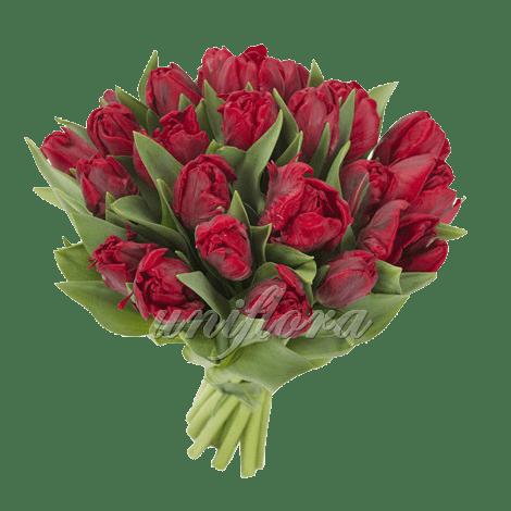 Букет из 21 бордового тюльпана