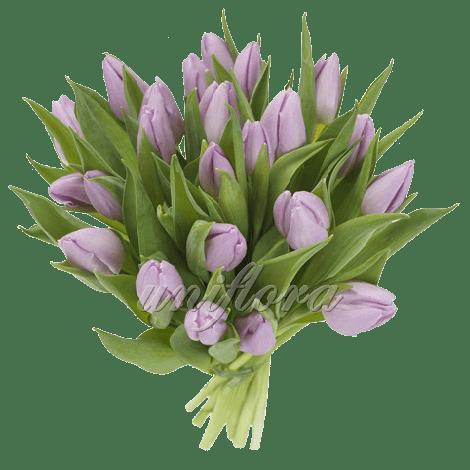Букет из 19 сиреневого тюльпана