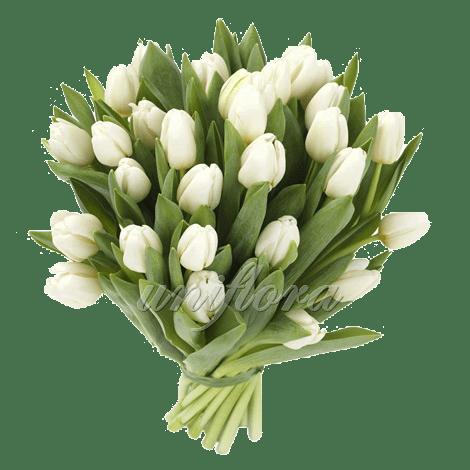 Букет из 31 белого тюльпана