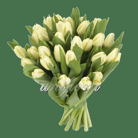 Букет из 31 кремового тюльпана