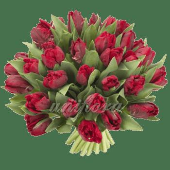Букет из 35 бордовых тюльпанов
