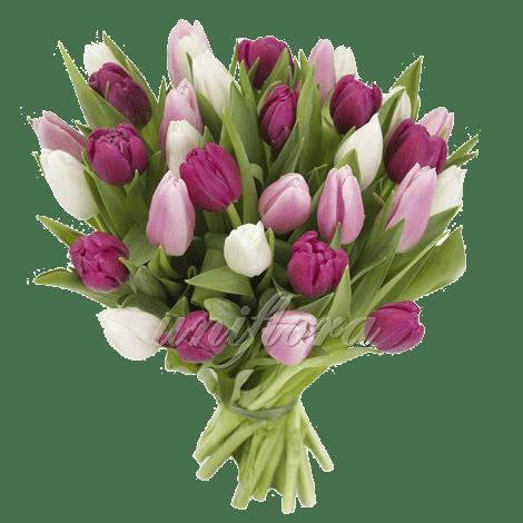 """Букет из 35 тюльпанов """"микс"""""""