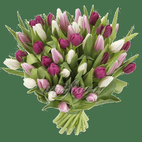 """Букет из 51 тюльпана """"микс"""""""