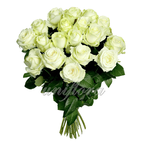 Букет из 25 белых роз | Аваланш (укр)