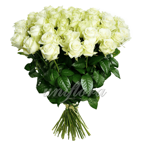 Букет из 51 белой розы | Аваланш (укр)