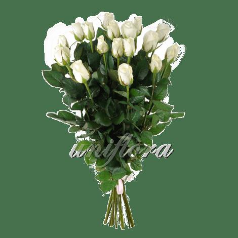 Букет из 19 белых роз | Акито (укр)
