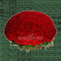 Букет из 1001 красной розы | Гран При (укр)