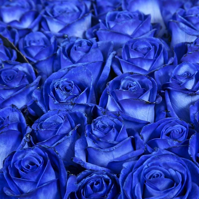 Синие розы (Заказ от 5шт.)