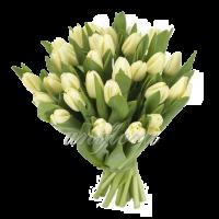 Букет тюльпанов кремовых