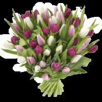 Букет тюльпанов микс бело-розово фиолетовый