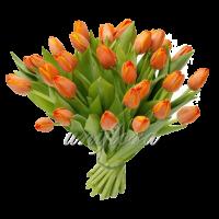 Букет тюльпанов оранжевых