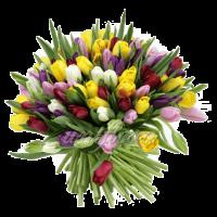 Букет тюльпанов разноцветный микс 1