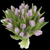 Букет тюльпанов сиреневых