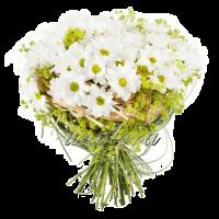Каркас 4белая хризантема, алчемилла