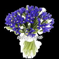 Смешанный 6 тюльпаны и ирисы 2