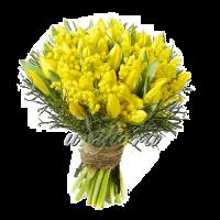 Смешанный 8 31 тюльпан, мимоза