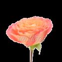 """Пионовидная роза """"Оранжево-розовая"""""""