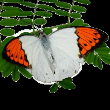 Оранжевый - наконечник