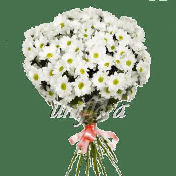 Букет из 13 веток хризантемы Бакарди